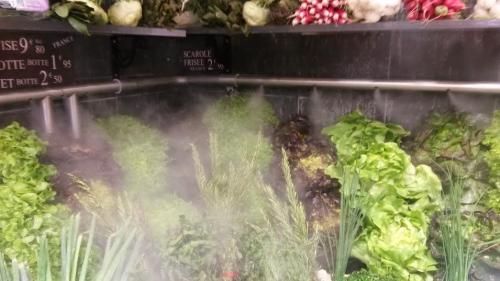 Brume saladiière.jpg